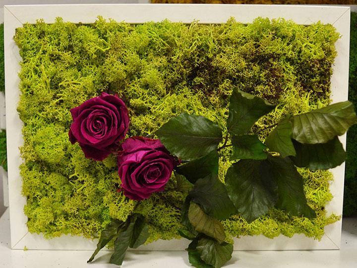 Quadro in lichene con rose stabilizzate