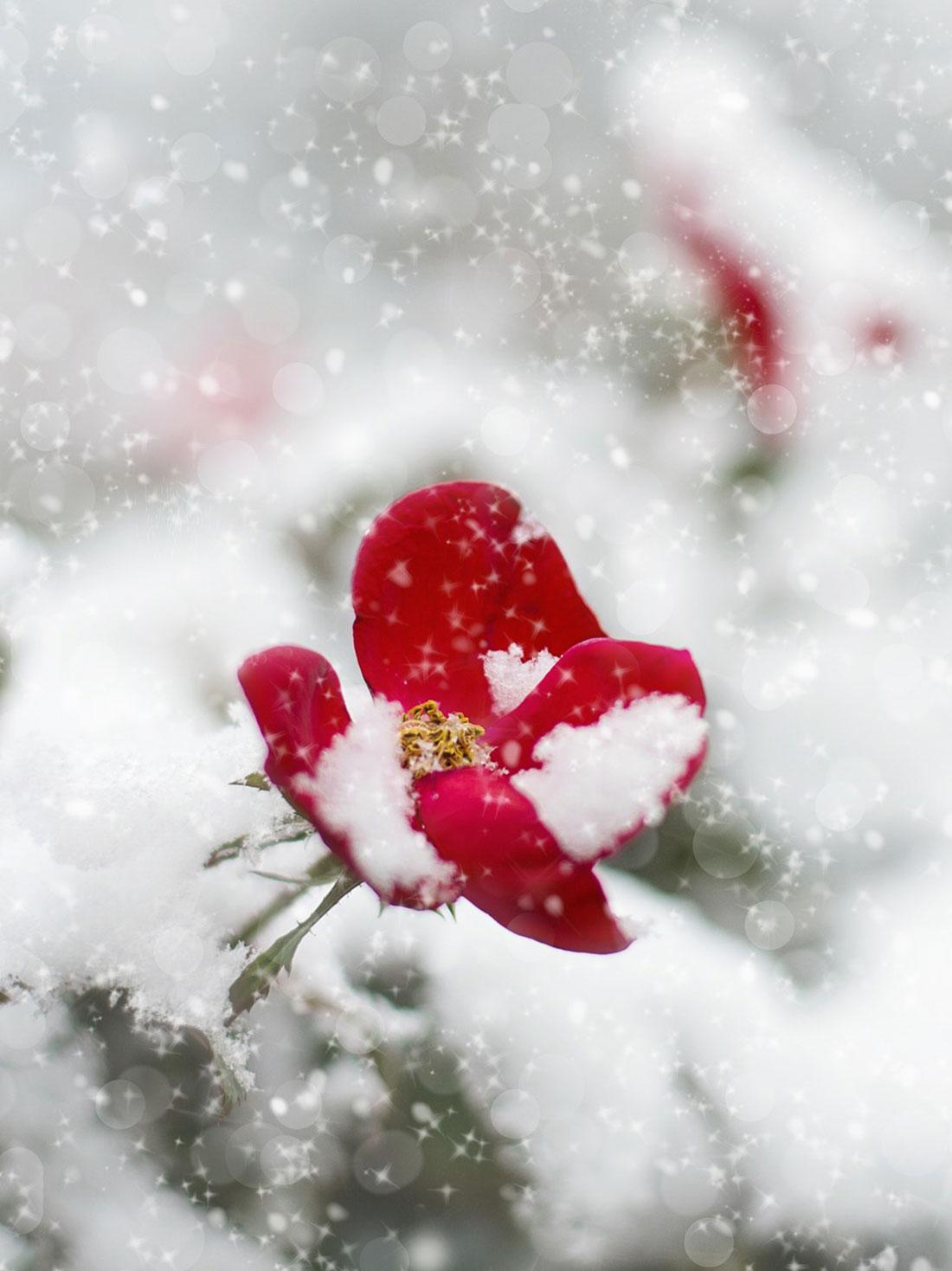 Fiori Da Giardino In Montagna 10 piante che resistono anche in inverno - centro fiori padova