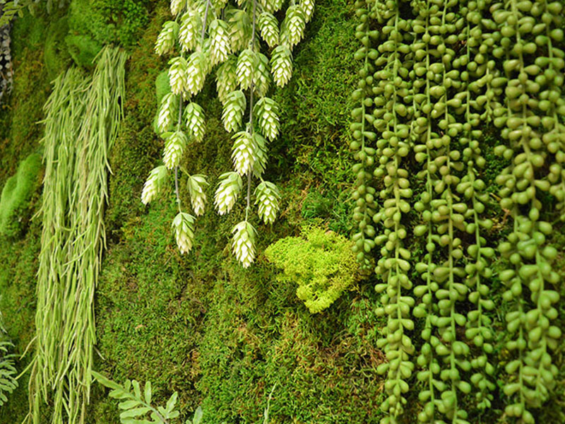 Pannelli Vegetali